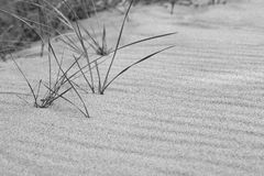 Dune grass in black and white with sand ripples texture.  Copysp Stock Images