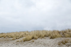 Dune grass blowing in the wind. In the background the sky Stock Photo