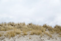 Dune grass blowing in the wind. In the background the sky Royalty Free Stock Photography