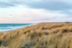 Dune grass blowing in the wind. And on the Baltic Sea Stock Photography