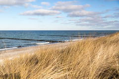 Dune grass blowing in the wind. And on the Baltic Sea Royalty Free Stock Photography