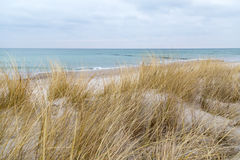 Dune grass blowing in the wind. And on the Baltic Sea Royalty Free Stock Images