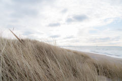 Dune grass blowing in the wind. And on the Baltic Sea Royalty Free Stock Photos