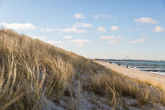 Dune grass blowing in the wind. And on the Baltic Sea Stock Images