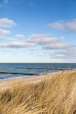 Dune grass blowing in the wind. And on the Baltic Sea Royalty Free Stock Photo