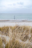 Dune grass blowing in the wind. And on the Baltic Sea Stock Image