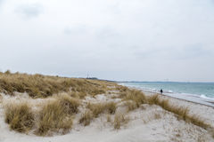 Dune grass blowing in the wind. And on the Baltic Sea Stock Photo