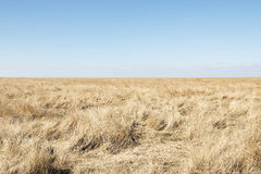 Dune grass with blue sky Royalty Free Stock Photo