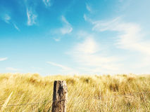 Dune grass with a blue sky. Dune grass on a blue summer sky , toned with retro film colors Stock Image