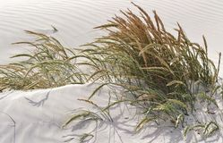 Dune grass. Close up of sand dunes with dune grass Stock Images