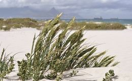 Dune grass. Close up of sand dunes with dune grass Royalty Free Stock Image