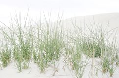 Dune grass. Close up of sand dunes with dune grass Royalty Free Stock Photo