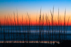 Dune Grass Dawn Stock Image
