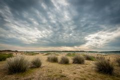 Dune grass in the Dunes d`Hattainville, Normandy Fance. Dramatic sky Royalty Free Stock Photography