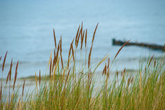 Dune grass in front of blurred eastern sea of Germany royalty free stock images