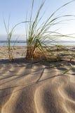 Dune grass. Stock Photos