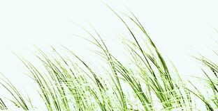 Dune grass impression. Close up of dune grass at the beach Stock Photo
