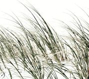 Dune grass inpression. Close up of dune grass at the beach Stock Photo