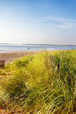 Dune grass Maine beach. Sand dunes don't stay within the fence - early Summer morning at a Maine beach royalty free stock photos