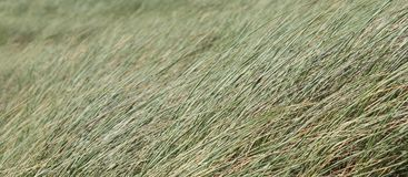 Dune Grass Stock Images