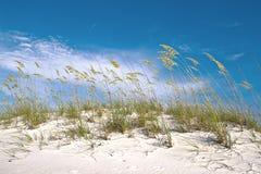 Dune grass near the beach Stock Image