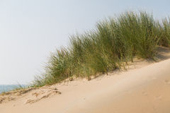 Dune grass. Is protecting the sand from being blown away in the dunes Royalty Free Stock Photos