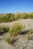 Dune grass on sandy beach Stock Photography