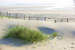 Dune Grass and Sandy Beaches Royalty Free Stock Photo