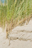 Dune Grass on Sandy Shore Stock Photography