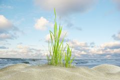 Dune grass and sea Stock Photography