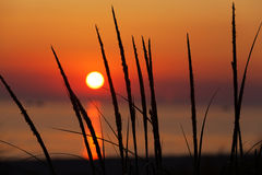 Dune grass silhouette - Michigan Sunset Royalty Free Stock Photography
