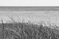 Dune grass in the wind on shoreline coastguard lonely concept in. Grey black and white sepia tone with copyspace Stock Photo