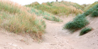 Dune Grasses on the beach Stock Images