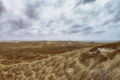 Dune grasses at the seashore Royalty Free Stock Image