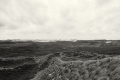 Dune grasses at the seashore Stock Photography
