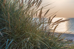 Dune with green grass. View for the beach Royalty Free Stock Photo