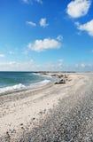 Dune Helgoland. Many Seals on stone beach Royalty Free Stock Photos