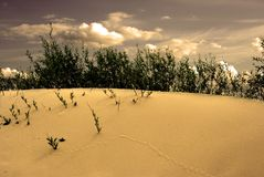 Dune landscape royalty free stock images