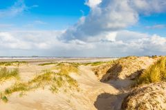 Dune landscape Dutch coast with sand drifts and wind eroded deep holes. Dunes on the Dutch North Sea coast at IJmuiderslag with wind sweeping stripes in the sand Royalty Free Stock Photography