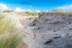 Dune landscape Dutch coast with sand drifts and wind eroded deep holes. Newly formed Dunes  with deep carved wind holes on Dutch North Sea coast at IJmuiderslag Royalty Free Stock Photography