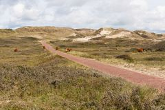 Dune landscape in the Netherland Royalty Free Stock Images