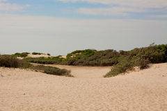 Dune landscape Stock Photography