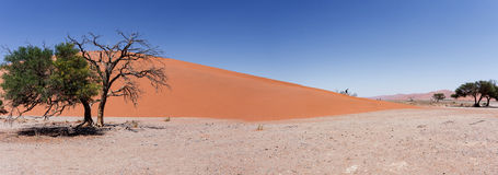 Dune large 45 de panorama dans le sossusvlei Namibie Photo libre de droits