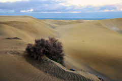 Dune Maspalomas Royalty Free Stock Photography