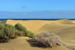 Dune Maspalomas Royalty Free Stock Photo