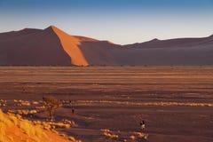 Dune in Namib Desert, Namibia Stock Image