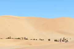 Dune 7 in the Namib desert Royalty Free Stock Photos