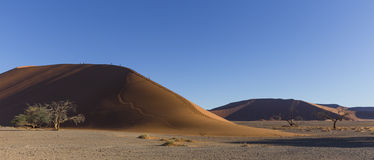 The dune 45 in the Namib Desert, Sossusvlei, Namibia. The dune 45 in the Namib Desert, Sossusvlei, in the Namib-Naukluft National Park of Namibia Stock Photos