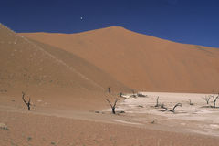 Dune of Namib Naukluft Park Royalty Free Stock Photography