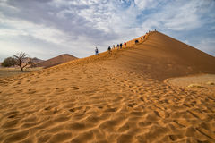 Dune 45 Namibia. A picture of the famous Dune 45 in Namibia Royalty Free Stock Photography